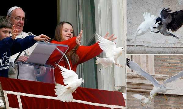 doves under attack