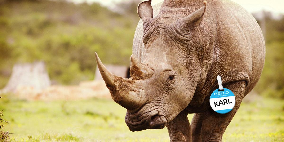 RINO Rhino